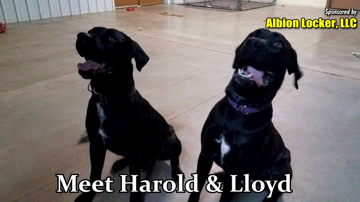 Harold and Lloyd