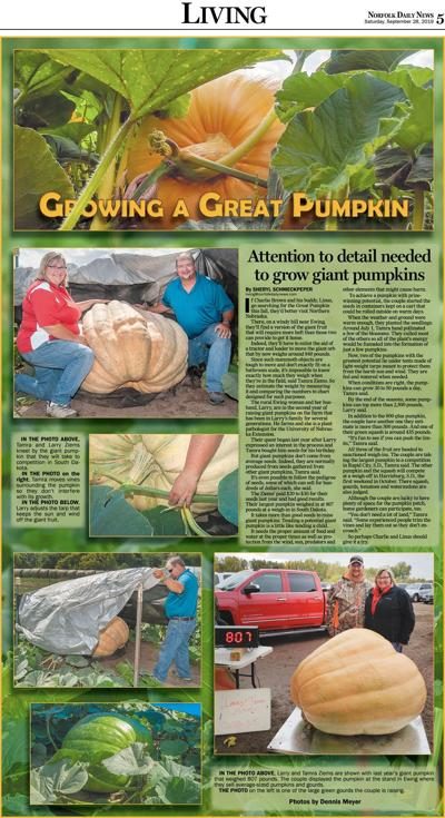 Growing a great pumpkin