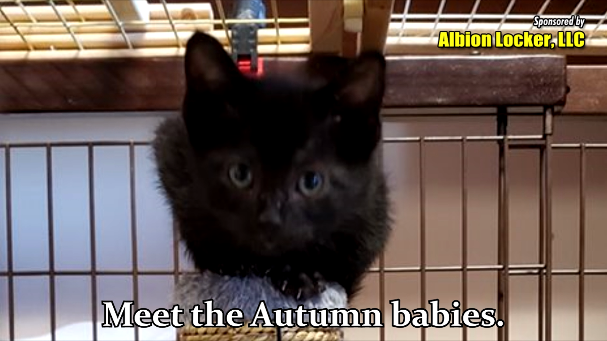 Awesome Autumn Babies