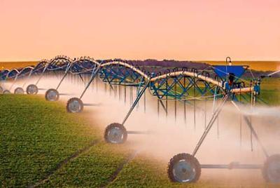 Crop report irrigation