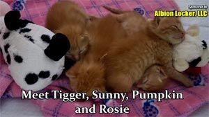 Tigger, Sunny, Pumpkin & Rosie