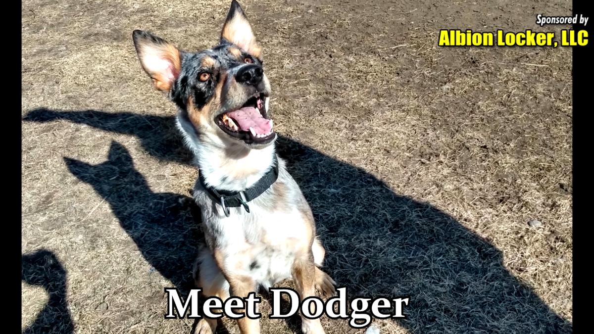 Dodger