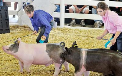 4-H Animal showing at the Madison County Fair
