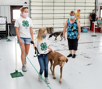 4-H, FFA competitions still a go during Madison County showcase