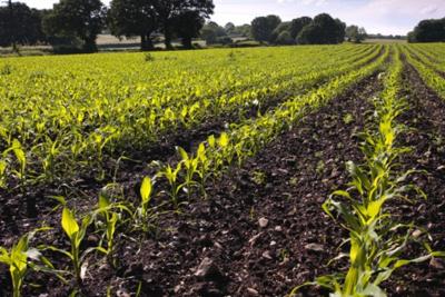 Field Planting
