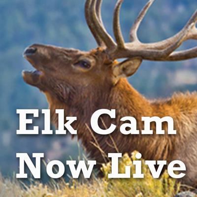 Elk Cam Live