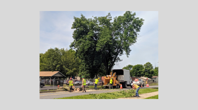 Tree_removal_LLBlvd_2019.png