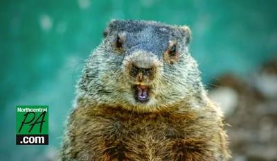 Groundhog_2021.jpg