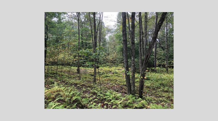 Ricketts Glen II_The Conservation Fund_2019.JPEG