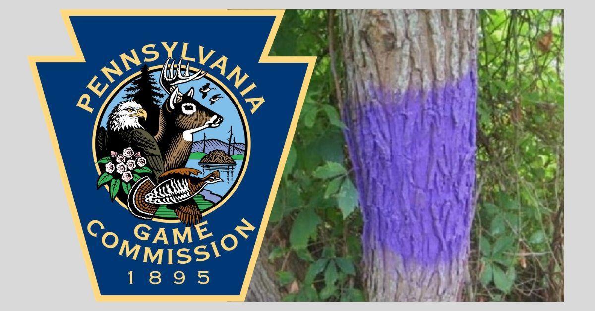 purplepaintcover_2020.jpg