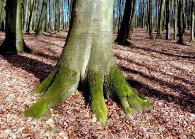 tree_2020.jpg