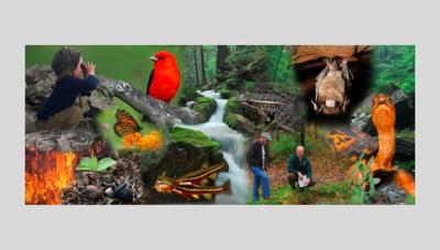 WildlifeActionPlan_graphic_2019.jpg