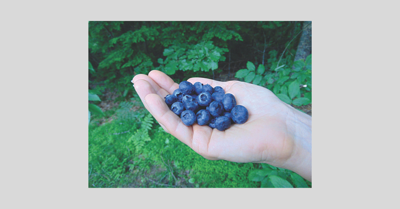 Blueberries_2019.jpg