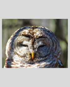SGP_birdwatching_owl_thumb_2020.jpg