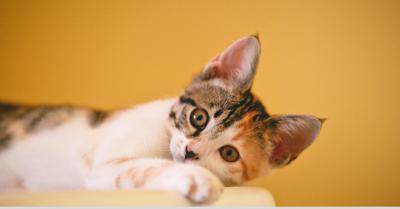 cat_canva_stock_2019.png