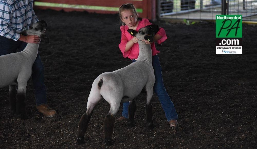 2021-07-19 Sarah Harding Sheep Show Lycoming County Fair