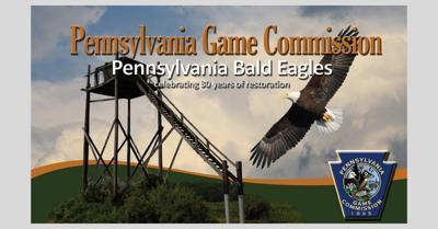 Bald eagle 2_2019.jpg