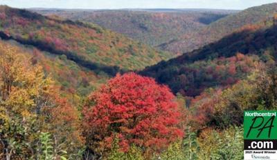 susquehannanock state forest in fall.jpg