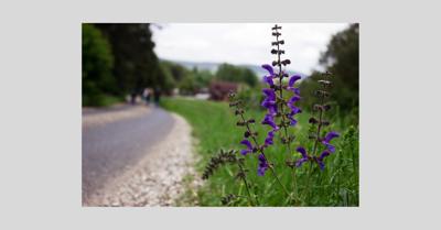 Adopt-A-Highway_roadside_flower_format_2019.png