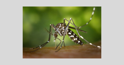 mosquito_2019.png