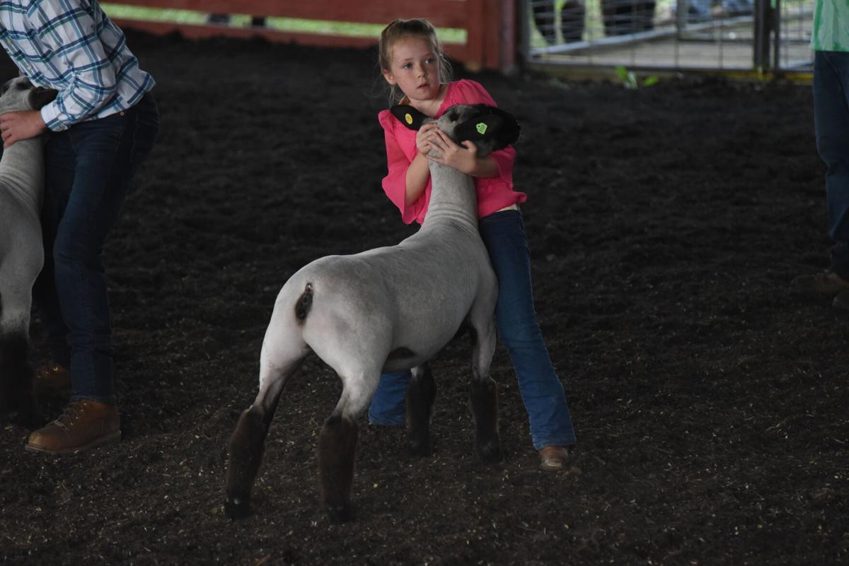 Sarah Harding Sheep Show Lycoming County Fair (1).JPG