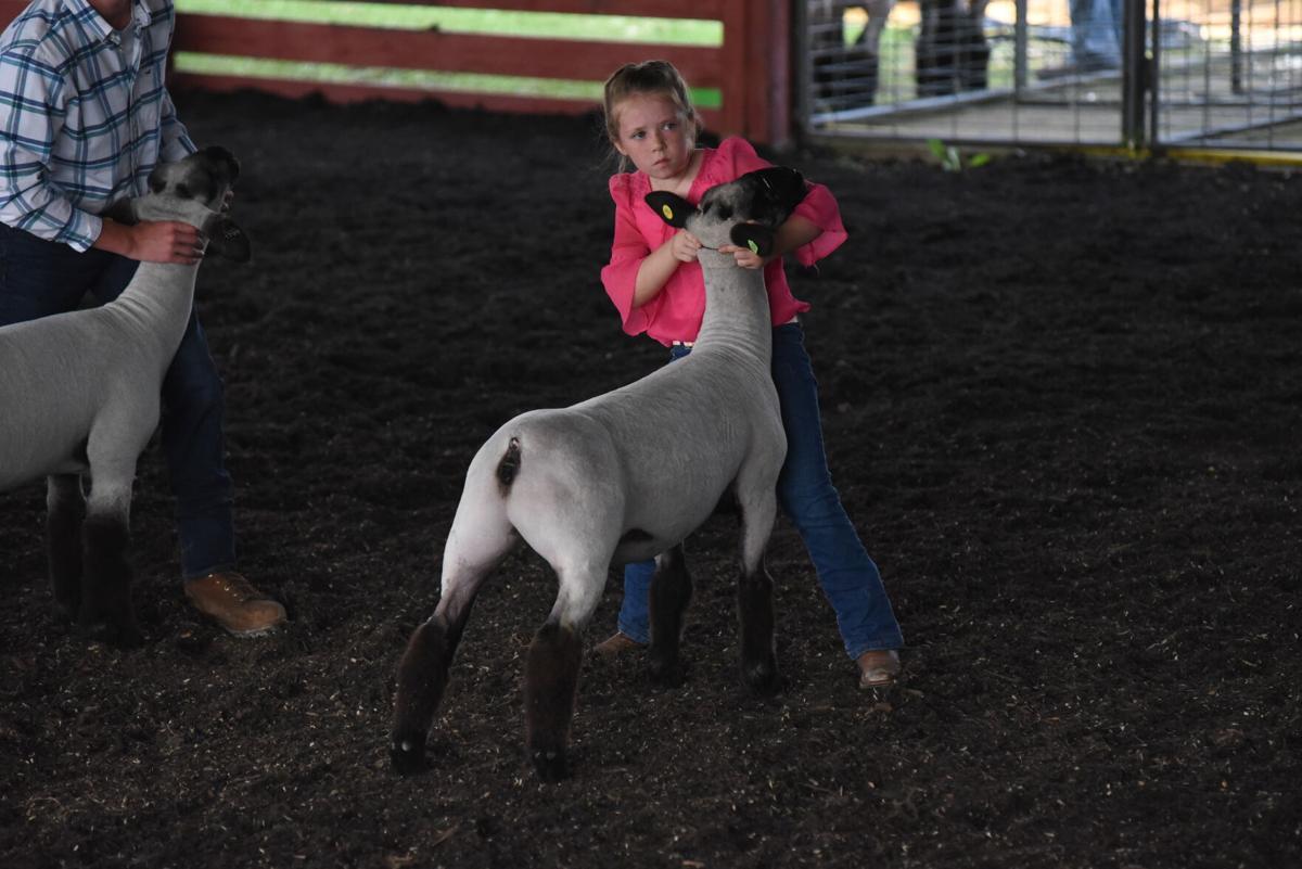 Sarah Harding Sheep Show Lycoming County Fair (2).JPG