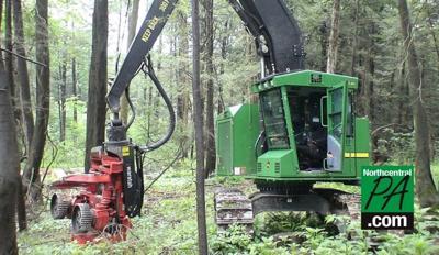 timber show machinery