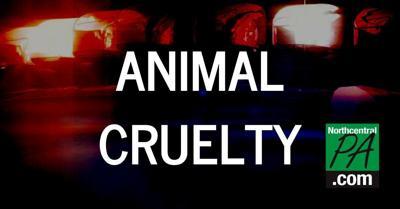 Animal cruelty 2020.jpg