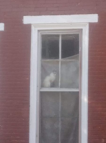 Photo of cat in window at Jersey Shore partially collapsed building - Bellabon's