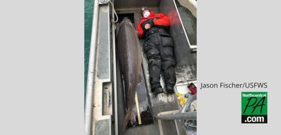 Detroit river fish