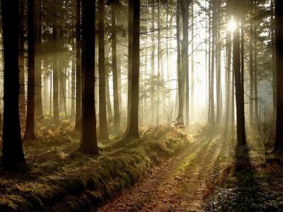 Depositphotos_forest.jpg
