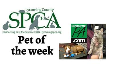 2021-01-09 Pets of the Week