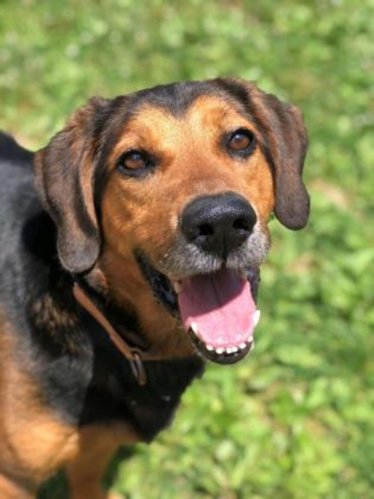 2020-10-23 SPCA Pet of the Week 2.jpg