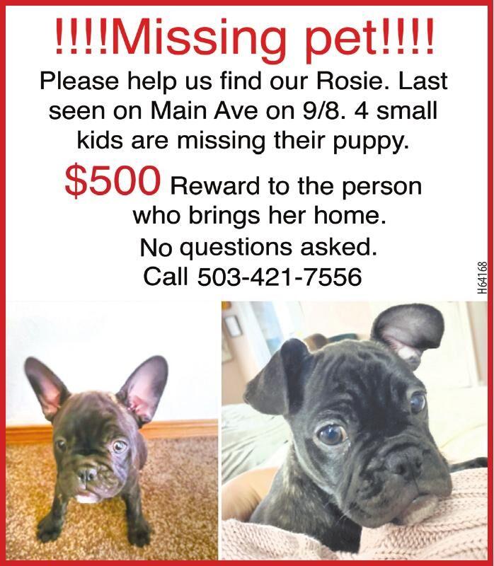 H64168 Missing Dog Rosie 2x4 091421