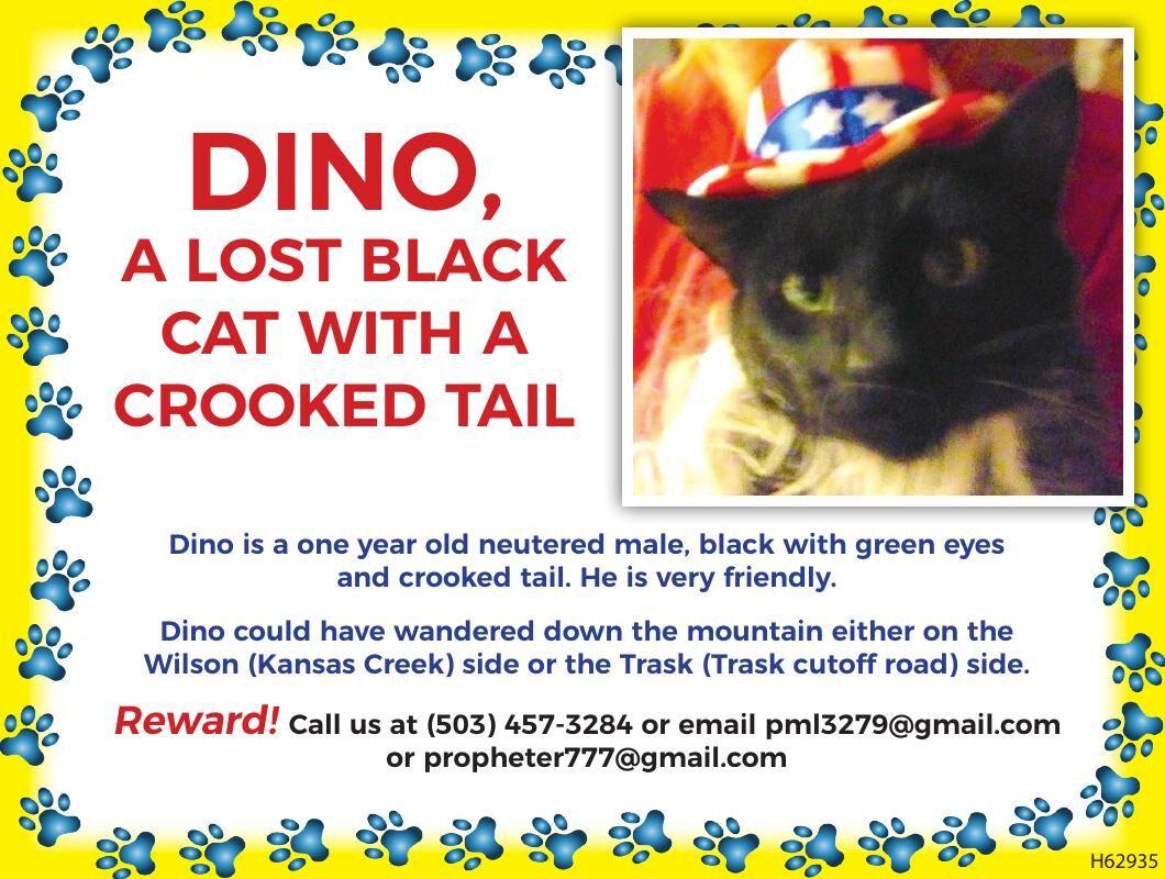 lost black kitty-friendly-crooked tail Tillamook County011921