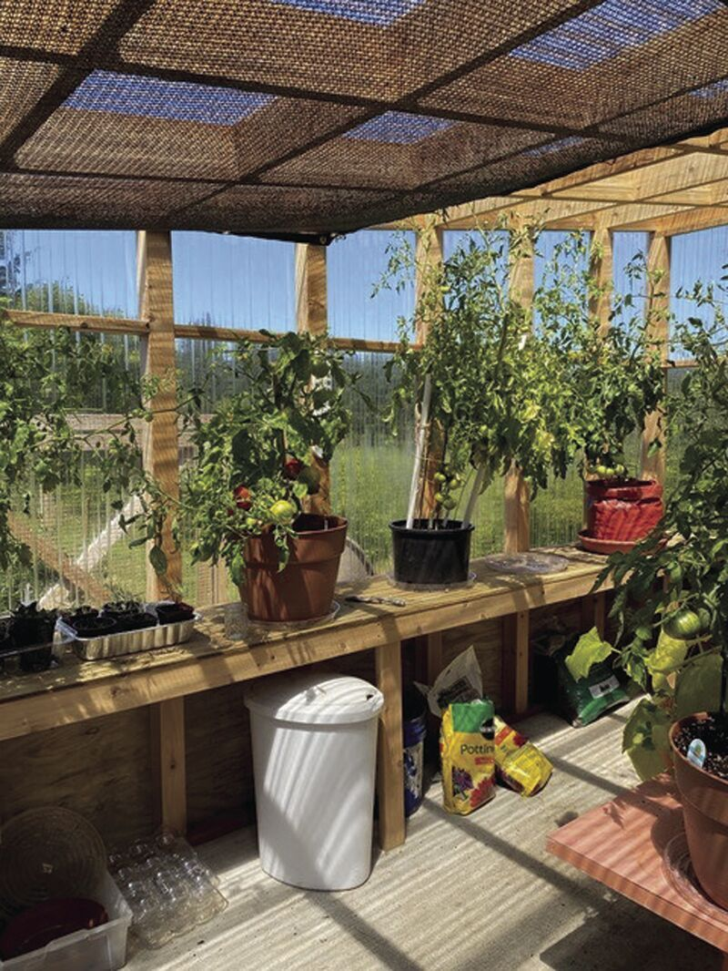 Janets greenhouse.jpg