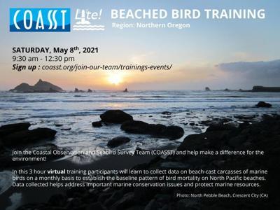 Beached bird training