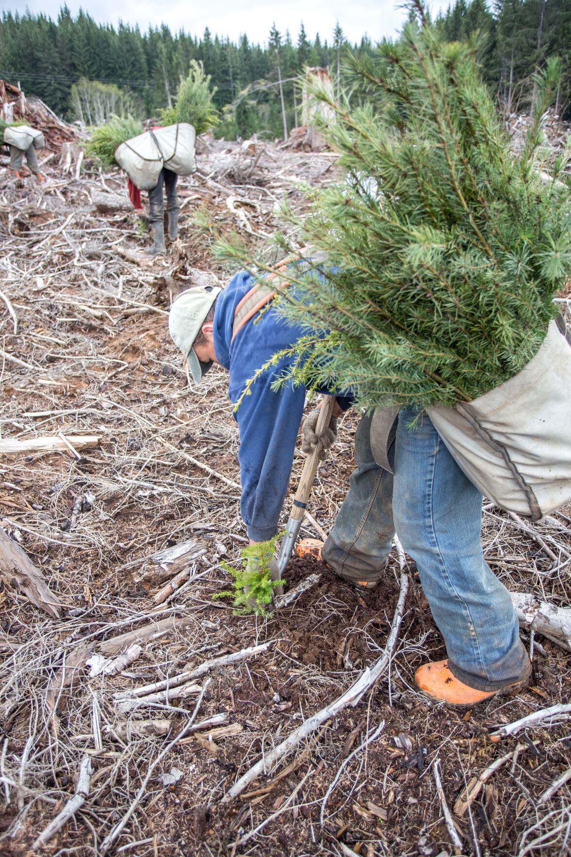 tree planting-4.jpg