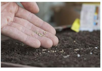 Give Seeds a Chance: Third Annual Seed Exchange