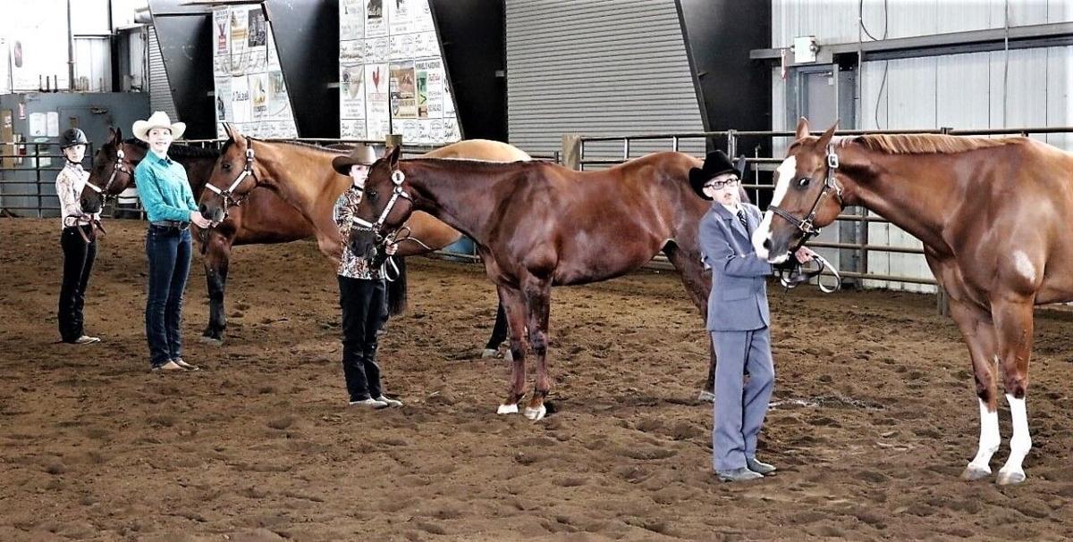 Horse Fair show