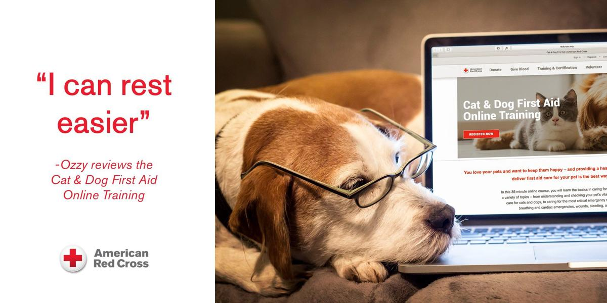 Red Cross has online course and app for cat and dog owners
