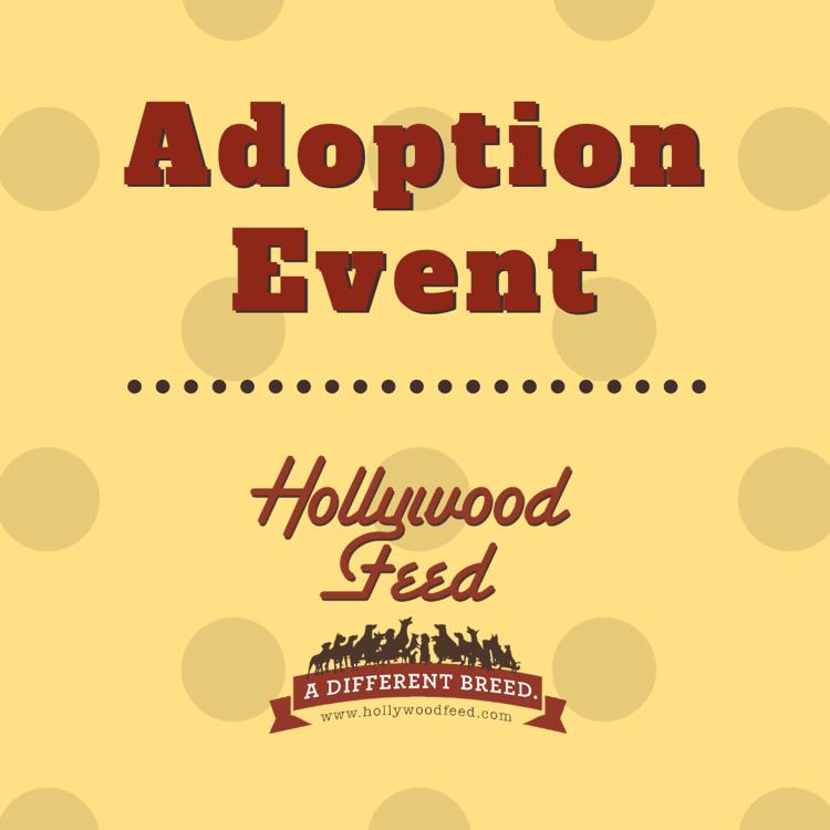 Second Chance Greyhounds Adoption Event