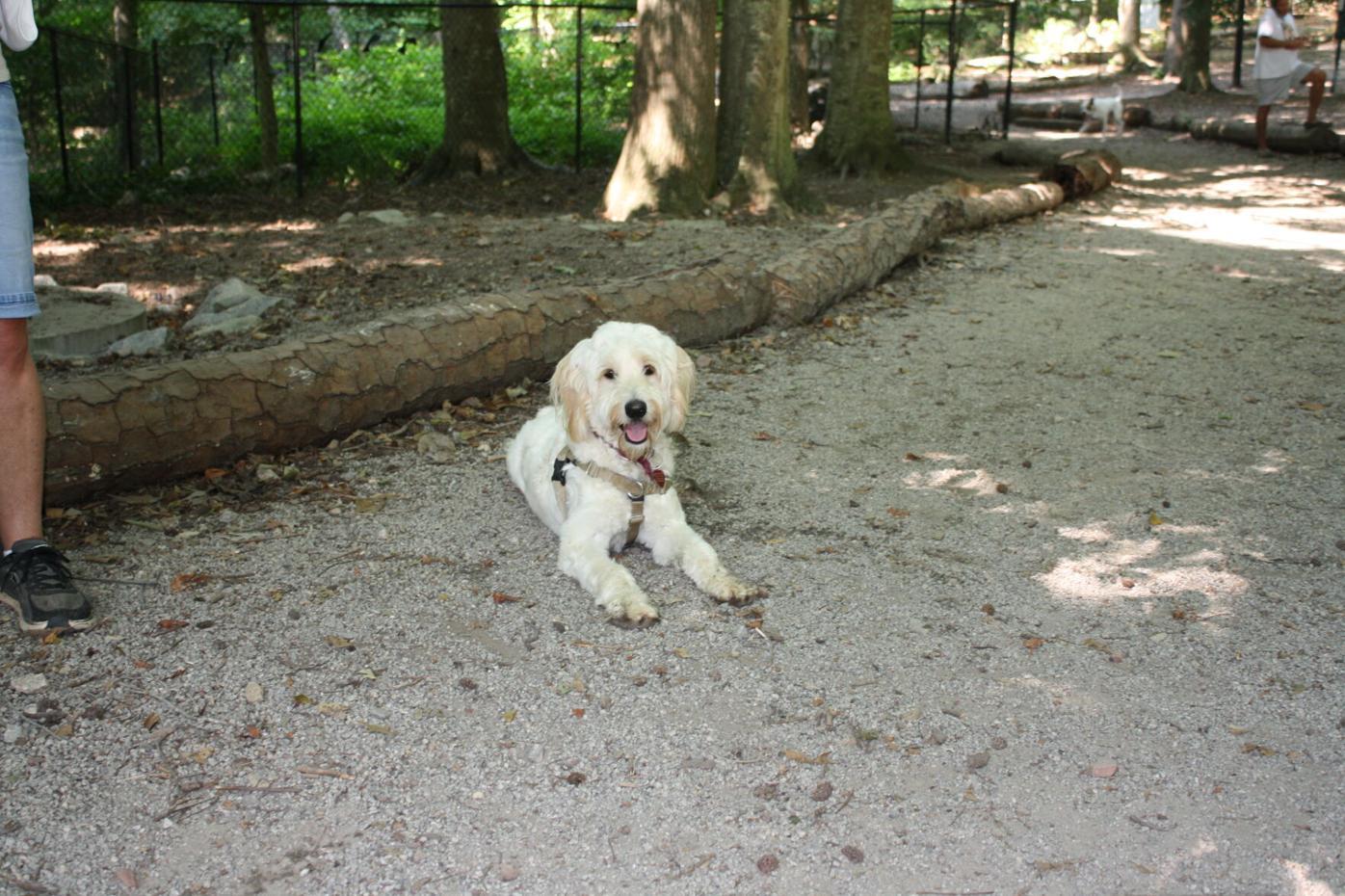 Ellie May Dunwoody Pup