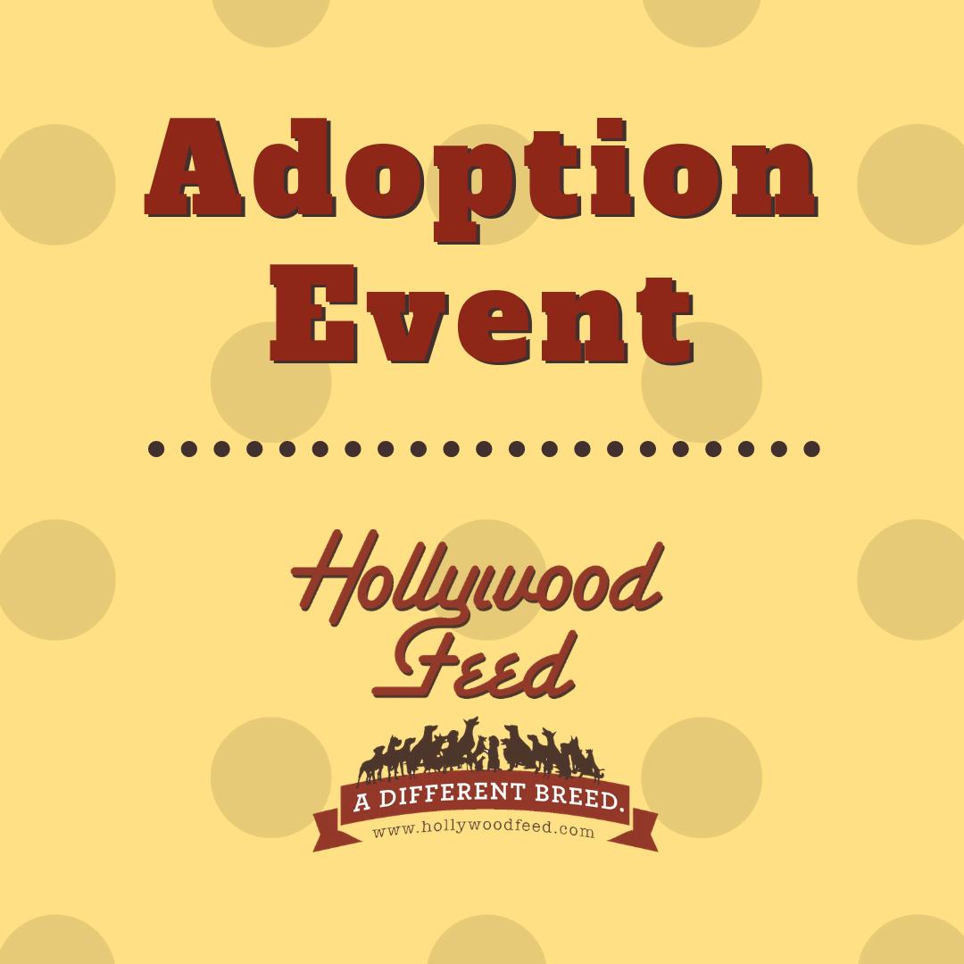 Gwinnett County Jail Dogs Adoption Event