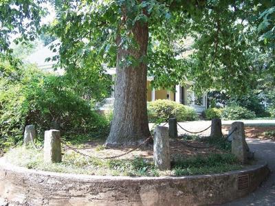 myth roast tree