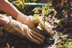 Johns Creek Beautification hunts for more 'secret garden' homes