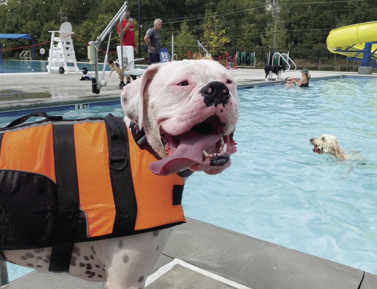Altoid - Drool in the Pool