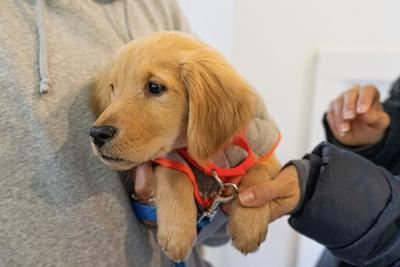 Furkids Puppy