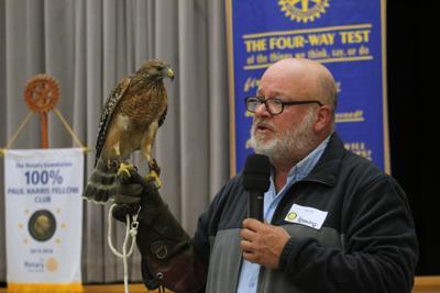 Chattahoochee Nature Center Henning Hawk