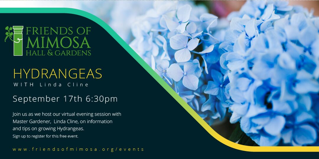 Hydrangeas with Master Gardener Linda Cline – Hosted by Friends of Mimosa Hall and Gardens